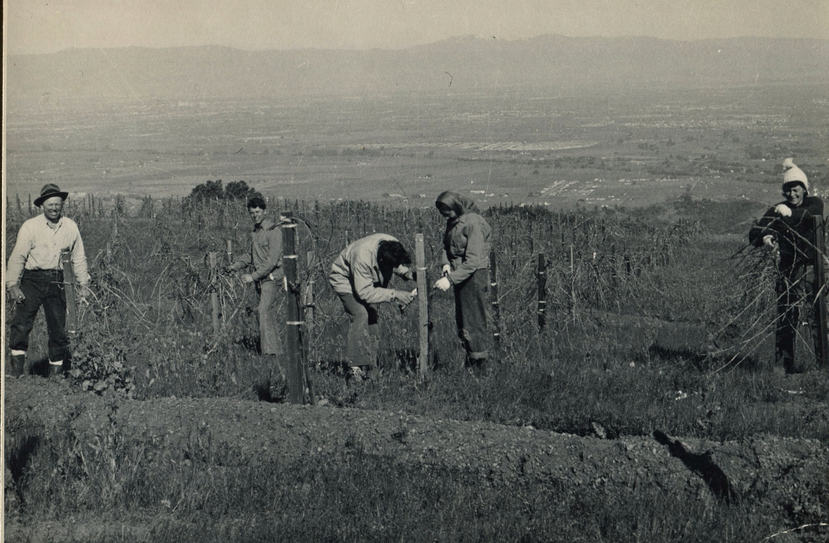 The Ray Family pruning - 1950s